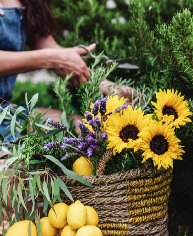 A basket of fresh sunflowers, lemons, and other garden ingredients.