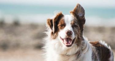 How Can CBD Help My Dog?