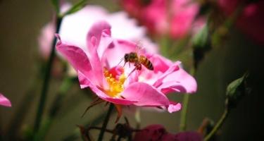 Your Seasonal Allergies and CBD