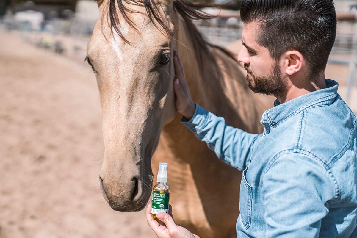 Organic Full Spectrum 2400mg Equine