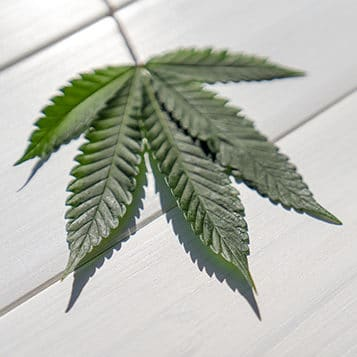 A hemp leaf on a wooden surface.