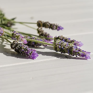 Sprigs of lavender lying on wood