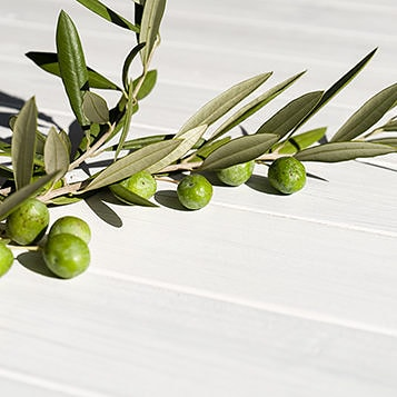 An olive oil branch with olives on a wooden surface